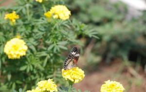 【顺义图片】七彩蝶园