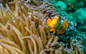 【仙本那图片】Finding-Nemo 在仙本那那片蔚蓝的海底