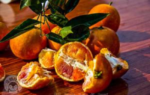 【长寿图片】【渝州游】才摘沙田柚,又闻血脐香