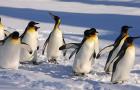 冬季限定旭川动物园+美瑛+青池+富良野一日游(含动物园门票/札幌往返 )