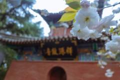 春访洛阳,误打误撞来赏花(古城篇·壹)