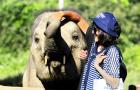 咨询立减60元丨清迈美莎大象营一日游(可搭配飞跃天际/丛林飞鼠)