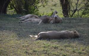 【桑给巴尔岛图片】塞伦盖提safari+桑给巴尔岛 17日游