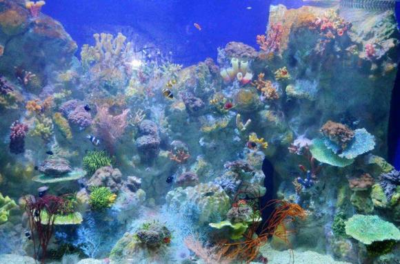 拥抱海洋 厦门海底世界门票 近距离接触海洋神奇生物