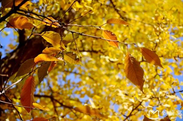 背景 壁纸 风景 绿色 绿叶 森林 树叶 植物 桌面 600_398