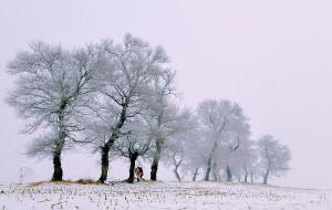 【松原图片】从冰湖腾鱼,到寒江雪柳,这个冬天不太冷。