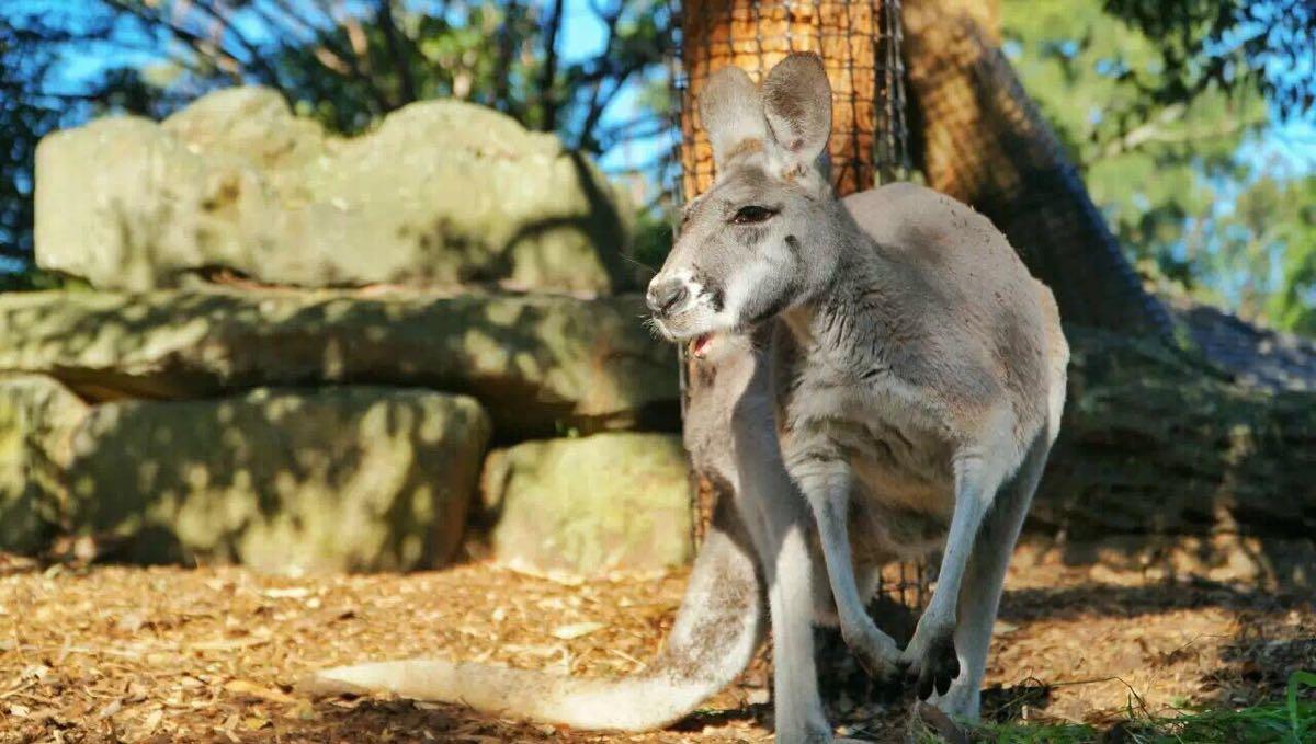 悉尼 情人港野生动物园门票(扫码入园)