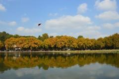 杭州最美的秋色