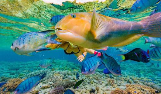"""推荐理由  / 双体游船,丰富的自助午餐 / / 飞""""常体验,全新视野俯瞰心型大堡礁/ /任意浮潜、免费享用Heardy外礁海上平台的各种设施/  01/ 全澳排名第一的大堡礁 哈迪大堡礁是天然的海洋公园,生活着许多稀有的和濒临灭绝的物种,同时有超过400余种不同类型的珊瑚礁石,1500种鱼类,4000余种软体动物以及242种鸟类,更是大量的鲸鱼,海豚及儒艮的栖息地。  02/飞常视野俯瞰心形礁 被誉为""""全球十大求婚圣地""""之一,无数情侣不远千里来到这里,坐飞机只为在空中"""