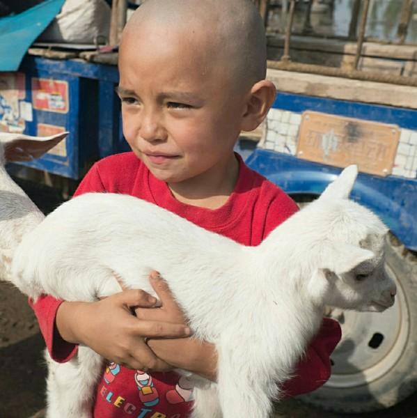 刚买到自己心仪小羊的小弟弟,抱着不肯松手,满面笑容.