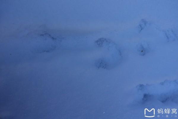 蚂蚁脚印简笔画