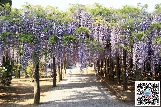 牛岛藤花园