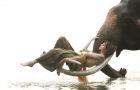 咨询有惊喜丨清迈 · 美旺大象营半日游/与大象亲密接触(竹筏/ATV/丛林飞跃)