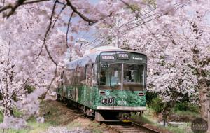 日本娱乐-岚山嵯峨野观光小火车