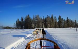 """【赫尔辛基图片】踏雪寻梅西,北极圈里等光来。高""""迪""""逸韵君知否,正是层冰积雪时。"""