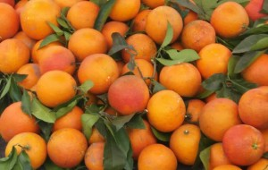 【长寿图片】长寿湖的橘子