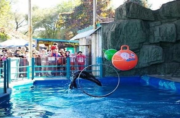 沈阳森林动物园 简介 沈阳森林动物园位于棋盘山风景区内,距市区17公里。是集动物保护、科普教育、科学研究、旅游休闲为一体的AAAA景区;是沈阳市青少年科普基地;是中国丹顶鹤人工繁育科研基地。沈阳森林动物园占地面积217公顷,是沈阳市一家展出珍稀野生动物的综合性动物园。 沈阳森林动物园 沈阳森林动物园位于棋盘山风景区内,距市区17公里。是集动物保护、科普教育、科学研究、旅游休闲为一体的AAAA景区;  沈阳森林动物园 是沈阳市青少年科普基地;是中国丹顶鹤人工繁育科研基地。沈阳森林动物园占地面积217公顷,是