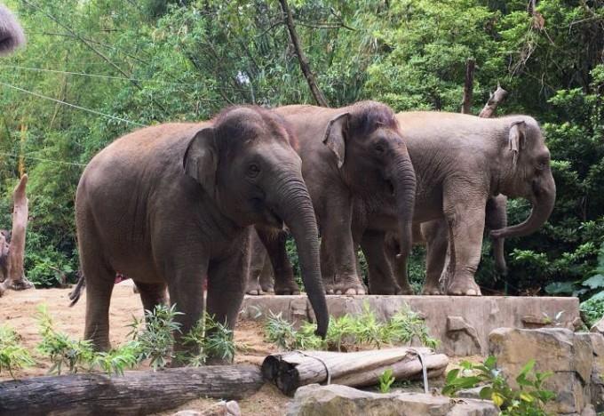 跟丸子一起玩长隆野生动物园~,广州长隆旅游度假区游