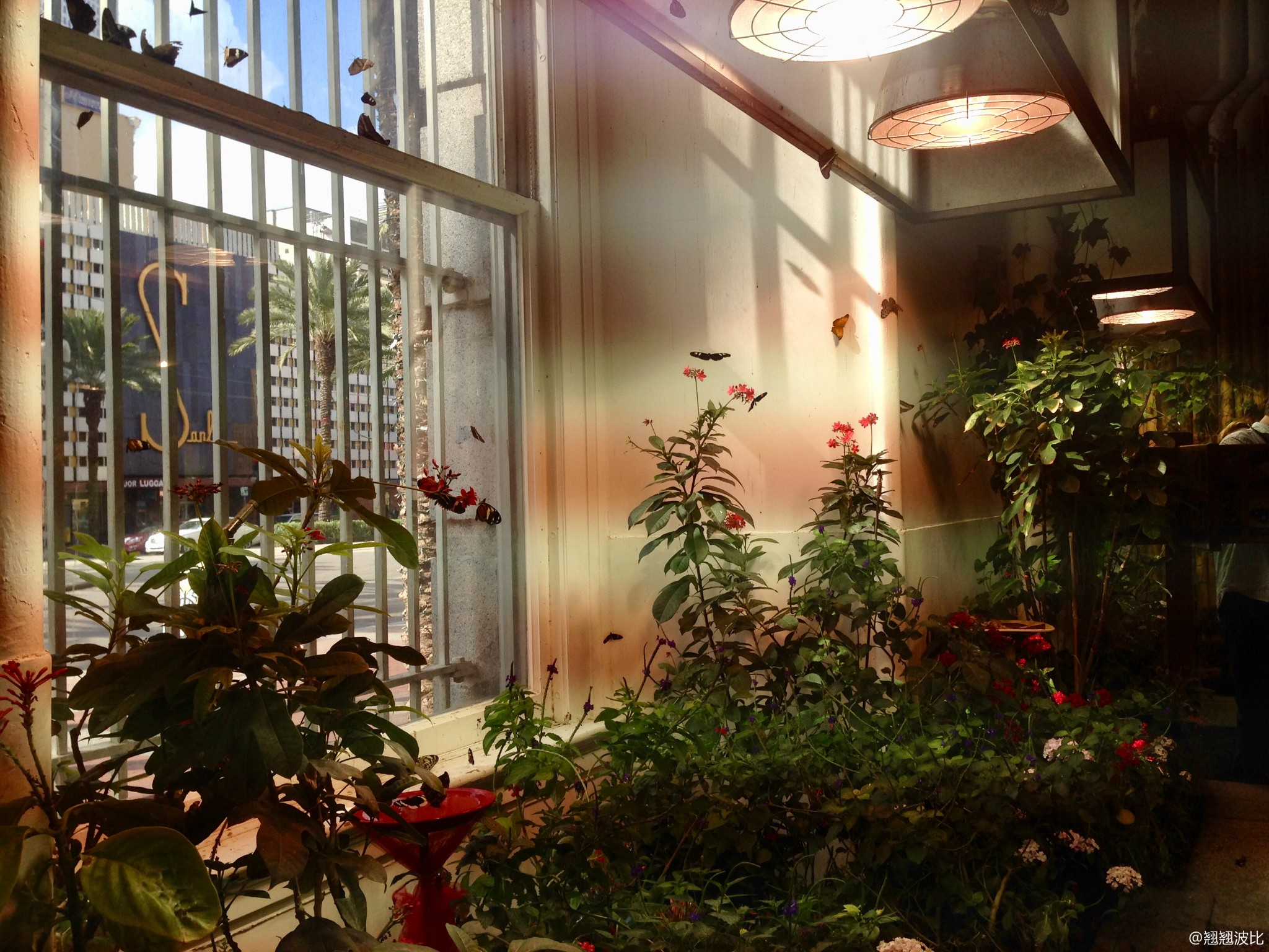 奥杜邦蝴蝶与昆虫园(Audubon Butterfly Garden and Insectarium)点评-新 ...