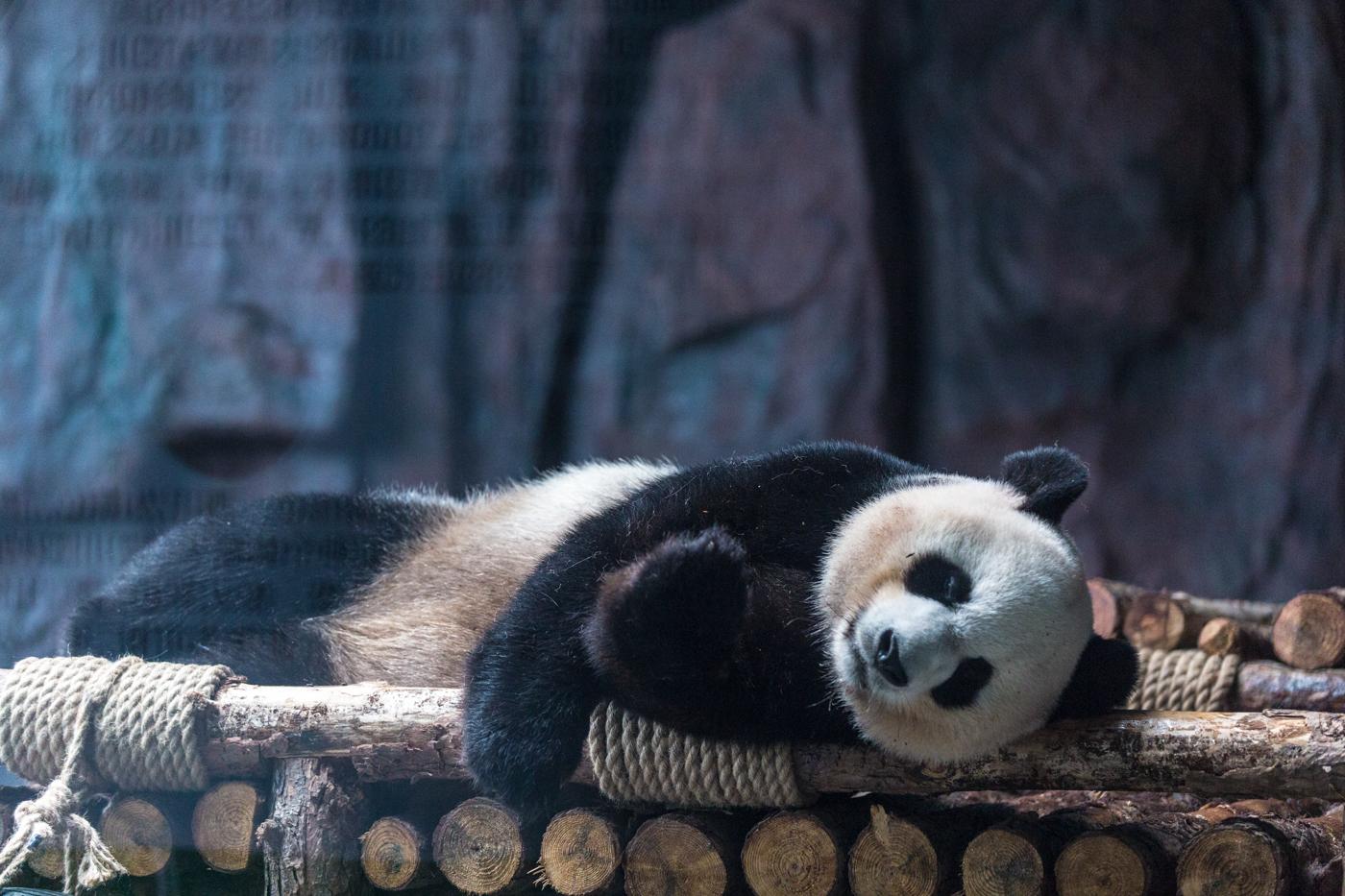 东莞寮步香市动物园门票是多少?香市动物园开放了吗?-大河票务网