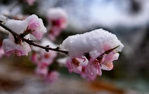 【承德图片】春花,春雪-承德春之魅影