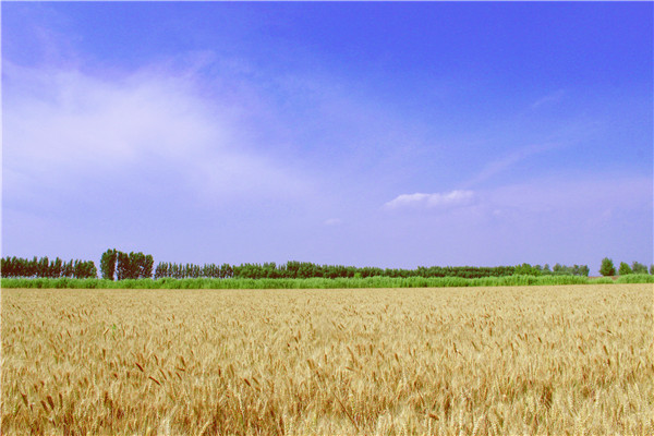 宝坻农家小院带你走出手机屏幕观赏美丽世界