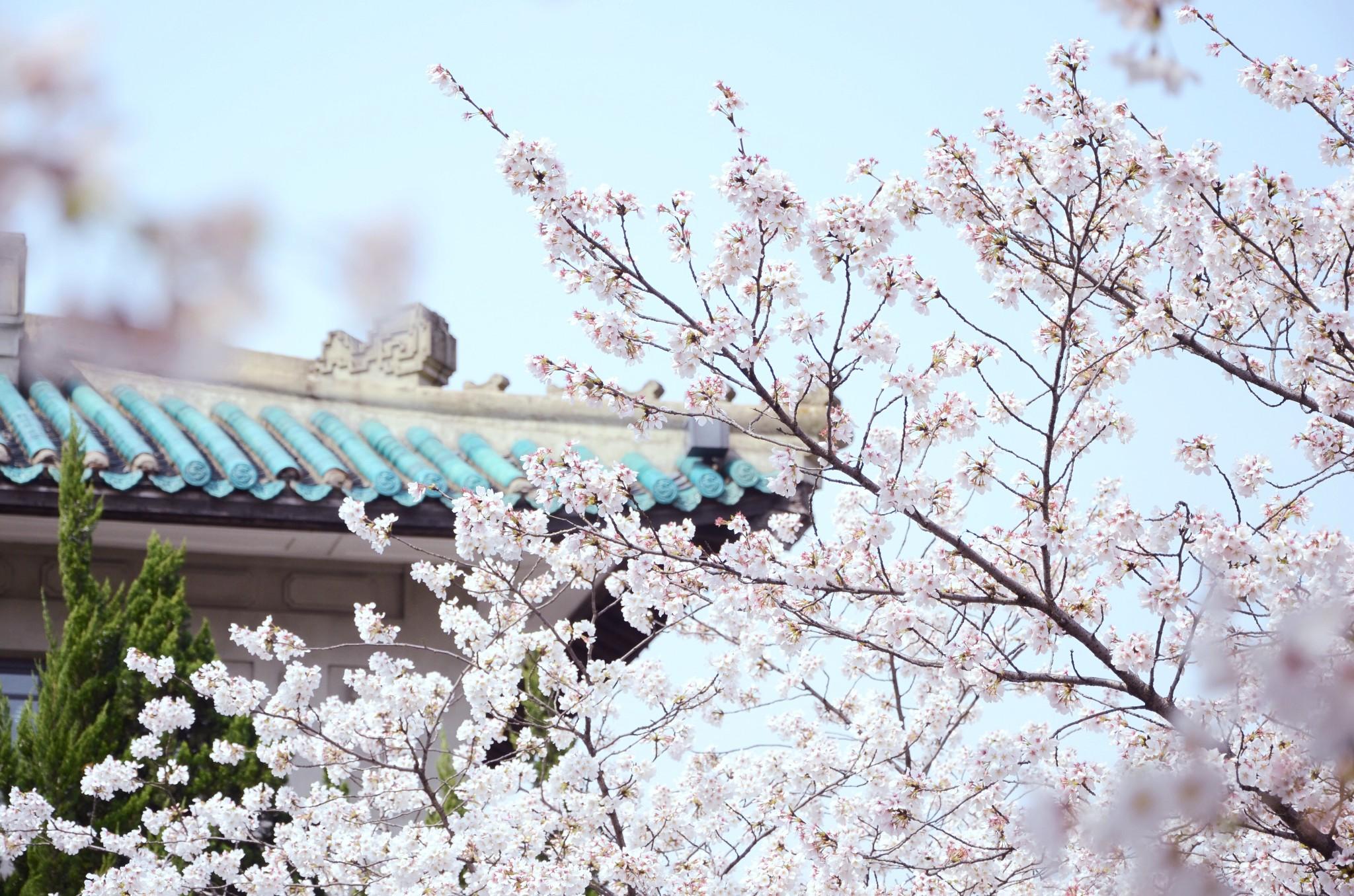 3月武汉天气穿衣指南,3月武汉看樱花天气,3月武汉看樱花穿什么衣服