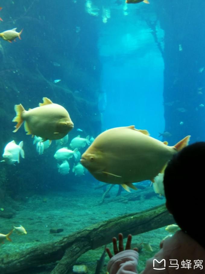 珠海长隆的经典项目大概就是马戏团,动物馆(海象馆,白鲸馆等),表演场