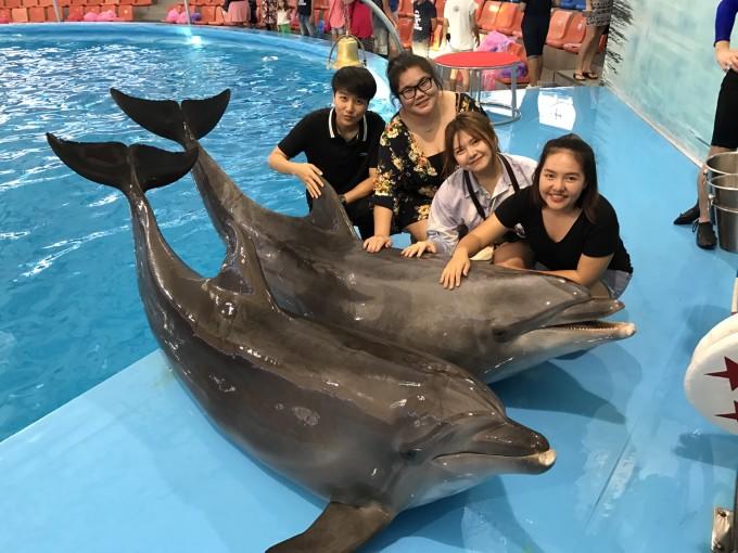 """我最爱 """"海豚"""",普吉岛旅游攻略 - 马蜂窝"""