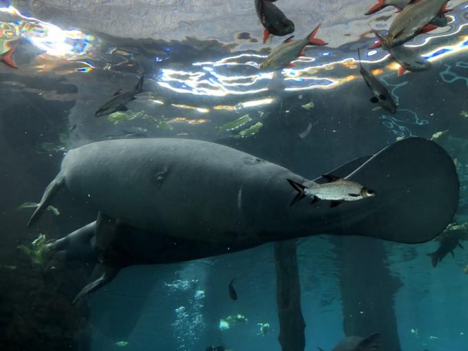 成都-珠海长隆海洋王国-广州长隆野生动物世界亲子游