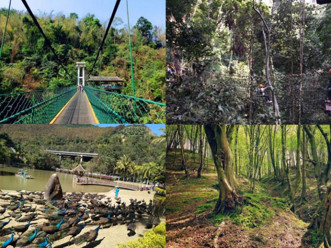 【在西双版纳原始森林公园 穿梭于树林间】  天然的超大氧吧, 置身于