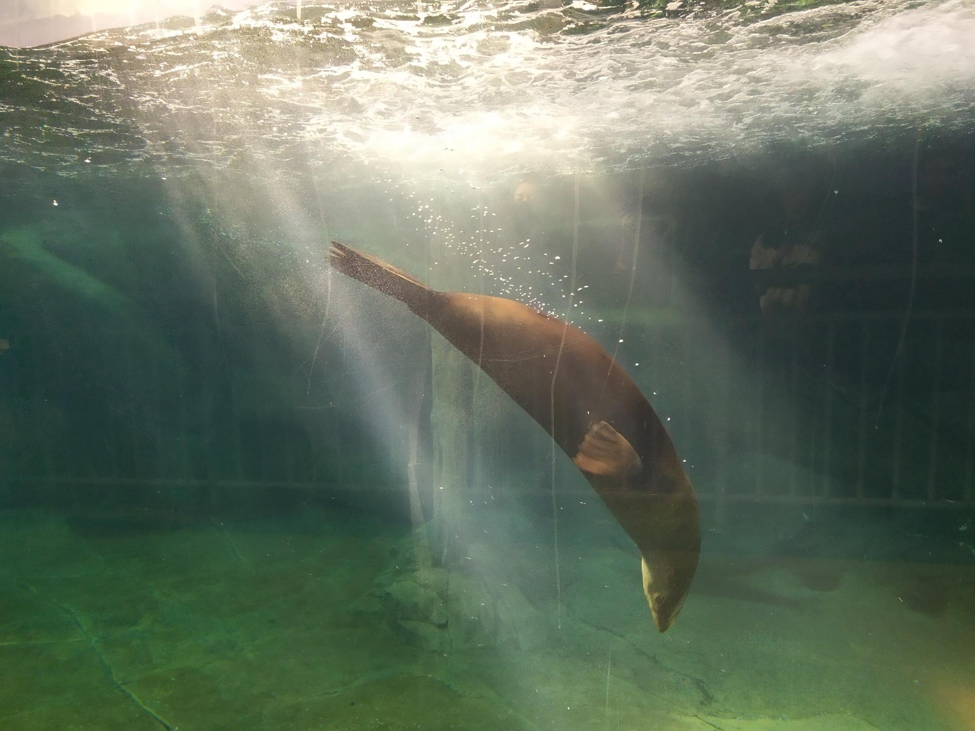 西安西安海洋馆攻略馆,曲江自助游攻略-马蜂窝极地奶香图片