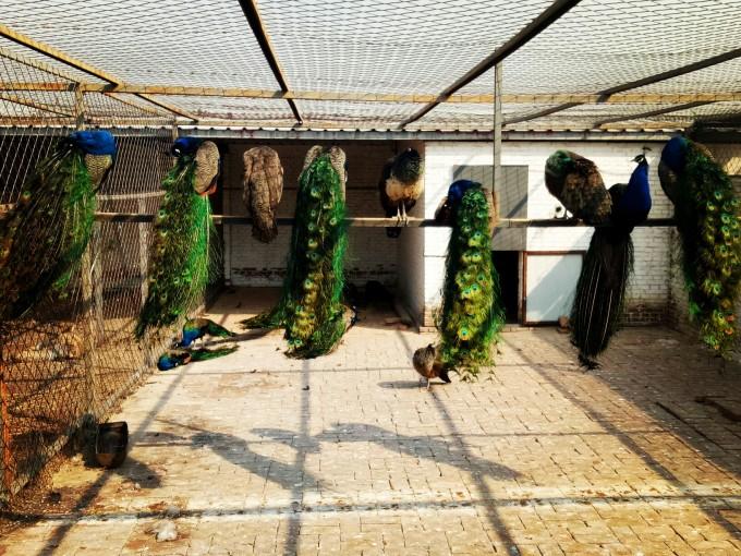 2019-2-23河北宣化黄羊滩,黄羊山文化园
