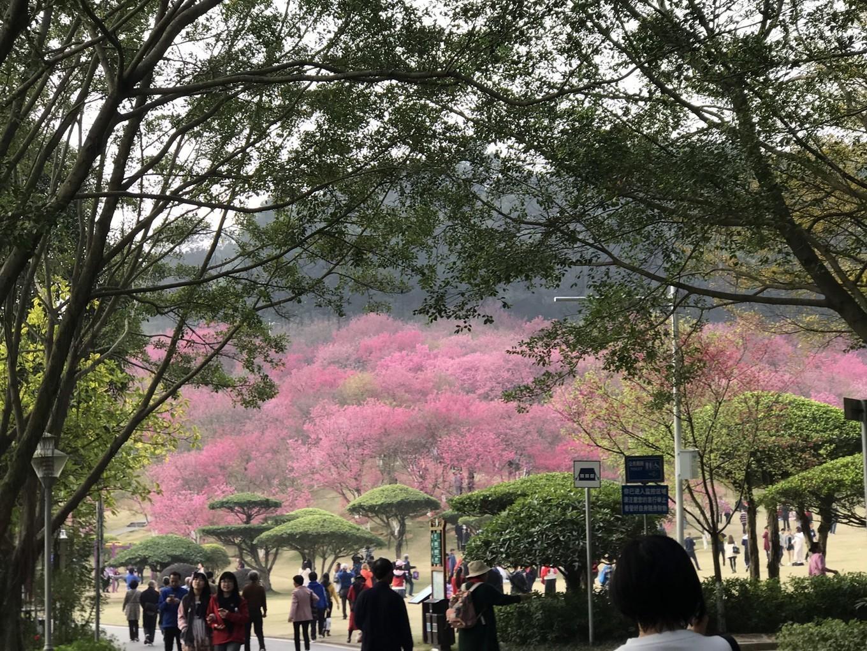 端午节广州周边游推荐,2019端午节去广州周边有什么好玩的
