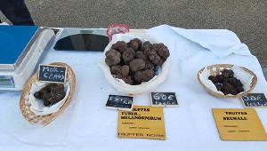 普羅旺斯的松露市場