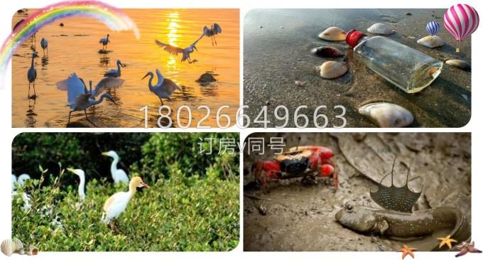 盐惠州夏天自由行v攻略,美绝了.,洲岛自助游攻略-马海南省兴隆自助游攻略图片