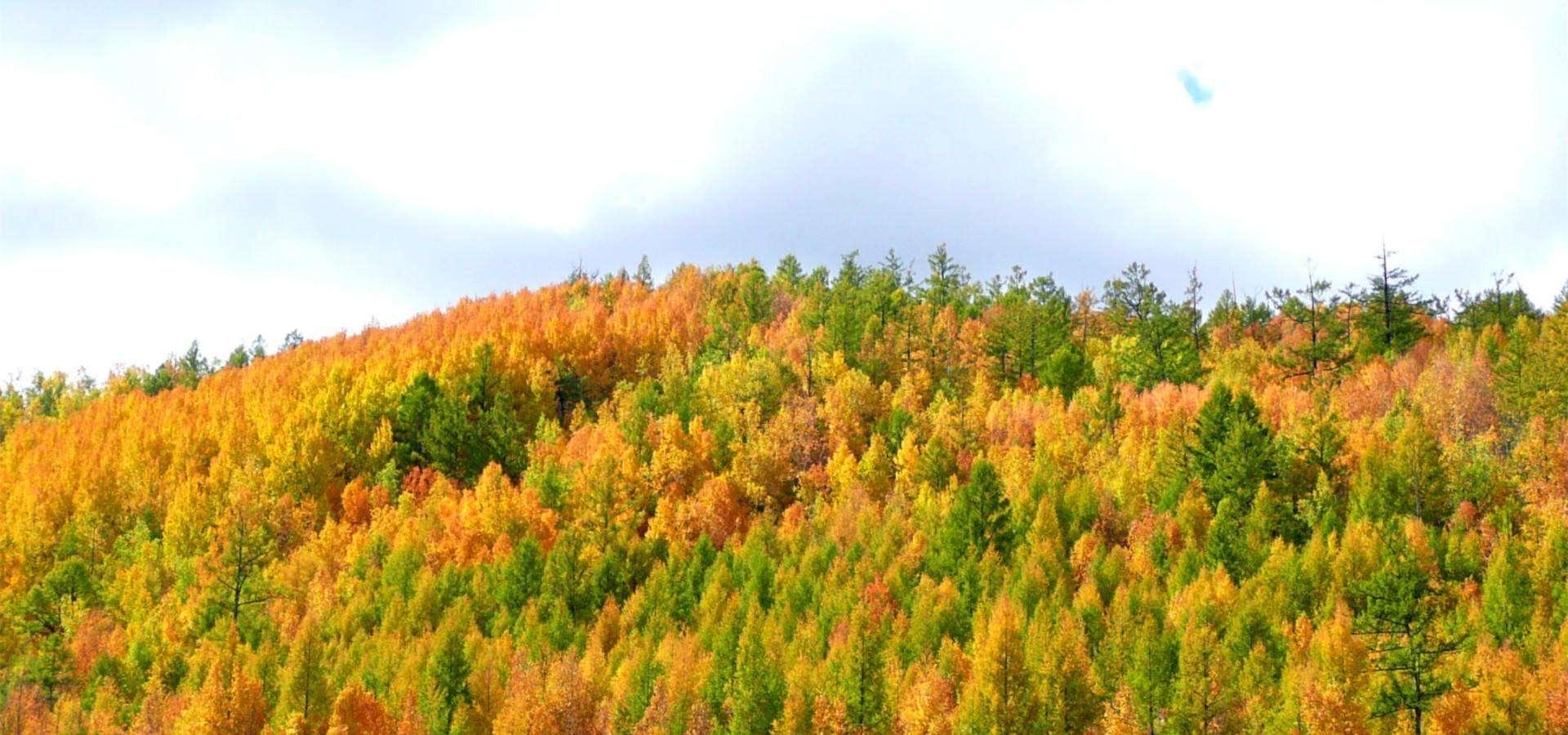十一国庆,看醉美的秋天,呼伦贝尔6日游