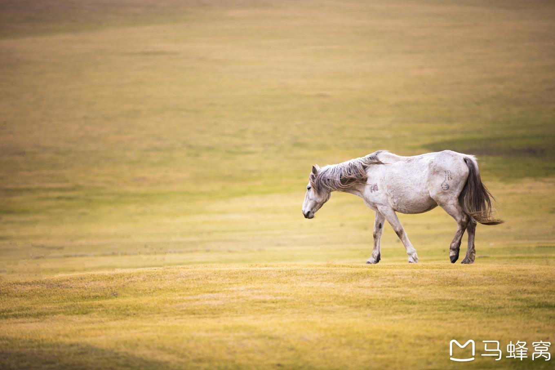 内蒙古全滚球bet365yazhou_足球滚球365_365滚球手机客户—醉心的呼伦贝尔大草原——自由行内蒙古呼伦贝尔