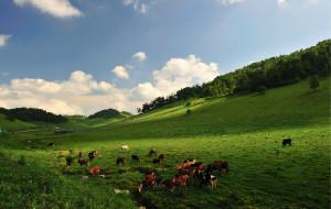 【宝鸡图片】夏季的关山牧场