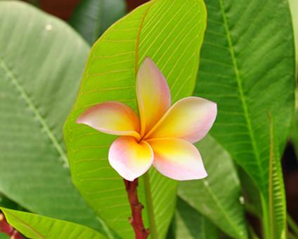 鲜花与微笑,从曼谷到清迈