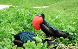 【加拉帕戈斯群岛图片】南美秘鲁、厄瓜多尔旅行记(十二)加拉帕戈斯群岛