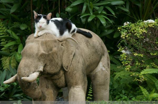 躲在小石象后面还有两只小猫咪,眯眼真可爱.