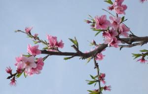 【平谷图片】2013平谷桃花节公交游攻略 桃花节在4月18日开幕