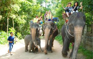 苏梅岛娱乐-骑大象徒步