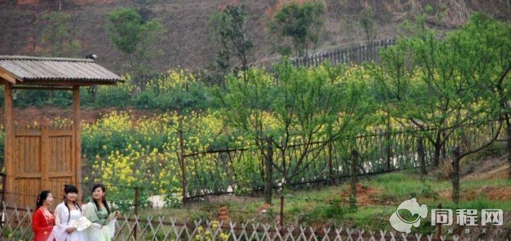 金太阳果园