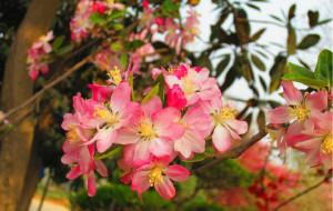 【许昌图片】春天到,百花开(311国道鄢陵——许昌段花都大道)