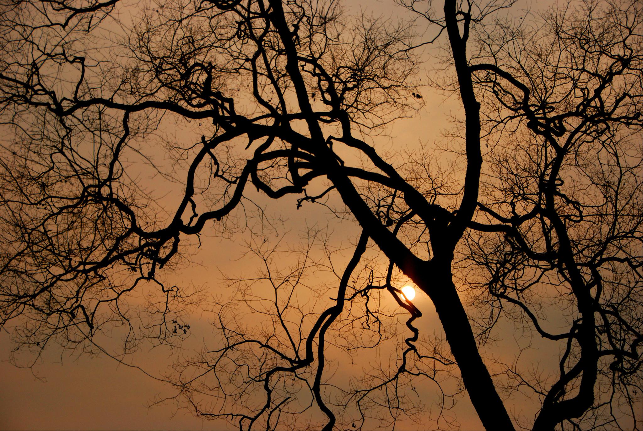 冬天的树影