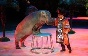 莫斯科娱乐-莫斯科大马戏团新团
