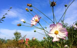 【霸州图片】【京郊周末好去处--驿捷玫瑰庄园泡温泉品美食】