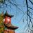 hongxia_